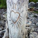 心脏在树的吠声雕刻了 免版税库存图片