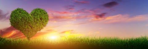 心脏在草的形状树在日落 爱,全景 免版税库存图片