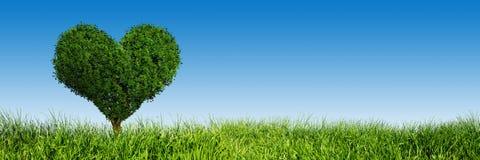 心脏在绿草的形状树 爱,全景 免版税库存照片