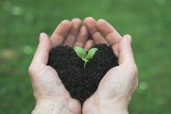 心脏形状土壤 图库摄影