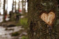 心脏形状在树雕刻了在冬天 免版税库存图片