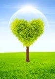 心脏形状树 免版税库存照片