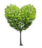 心脏形状树 免版税库存图片