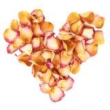 心脏形状由桃红色玫瑰花瓣制成作为在白色背景的浪漫构成 免版税库存照片