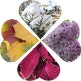 心脏拼贴画折叠了入一朵四生叶的花 填装的博士 免版税库存图片