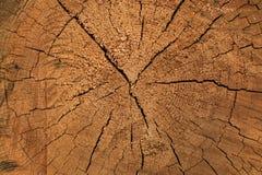 心脏木头 免版税图库摄影