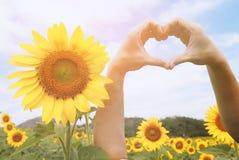 心脏标志有向日葵背景 图库摄影