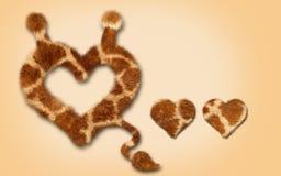 心脏毛皮,关闭与尾巴 标志设计 图库摄影