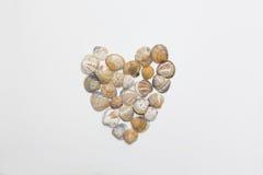 心脏由壳做成在白色背景 库存图片