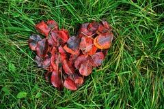 心脏由明亮的红色制成在绿草离开 免版税库存图片
