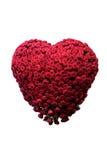 心脏由玫瑰做成,隔绝 库存图片