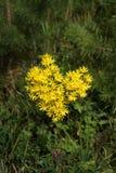 以心脏的形式黄色花 免版税库存照片