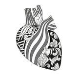 心脏的彩色插图 免版税库存照片