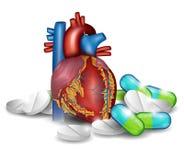 心脏解剖学和药片 免版税库存照片