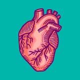 心脏象,手拉的样式 向量例证
