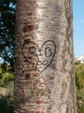 心脏雕刻了入树 免版税库存图片