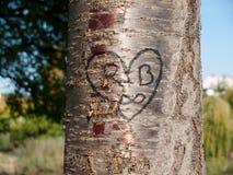 心脏雕刻了入树 免版税图库摄影