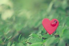 心脏 免版税图库摄影