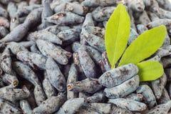 忍冬属植物的新鲜的开胃莓果-背景 库存照片