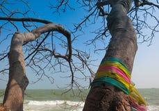 忠实的树 库存图片