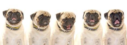 忠诚的朋友 5可爱的小狗 免版税图库摄影