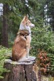 忧郁的狗坐树桩 免版税库存照片