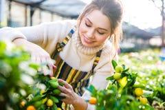 快乐的妇女花匠照料smal柠檬树 免版税图库摄影