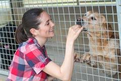 快乐的妇女通过篱芭给狗甜点 库存图片
