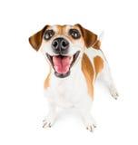 快乐的微笑的狗 免版税库存照片