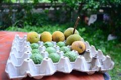 快乐的果子果子混合 库存图片