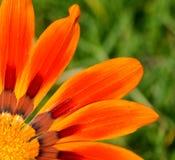 快乐的橙色花 免版税库存图片