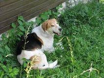 快乐的狗杂种动物 免版税库存照片