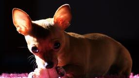 快乐的狗2 库存图片
