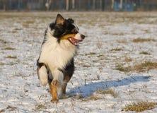 快乐的狗 库存图片