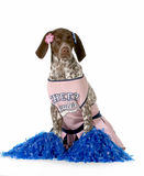 快乐的狗 免版税库存图片