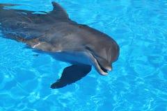 快活的海豚 免版税库存图片