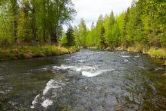 快速地流动在whittier的河 免版税图库摄影