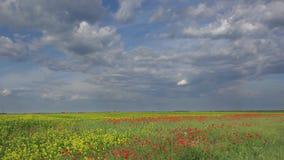 快速地移动在开花鸦片的蓝色平静的天空的白色蓬松云彩调遣,自然,田园诗地方,时间间隔秀丽  股票视频