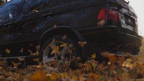 快速地驾驶通过在黄色叶子的胡同的黑SUV在公园 五颜六色的秋天叶子从轮子下面飞行  影视素材