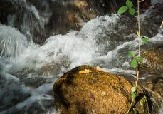 快速流动的山小河 库存图片