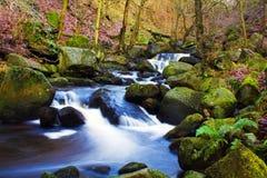 快速流动的溪 免版税库存图片