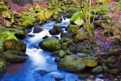 快速流动的溪 免版税库存照片