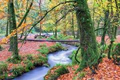 快速流动的运行流森林地 免版税库存照片