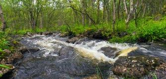 快速的森林河 库存照片