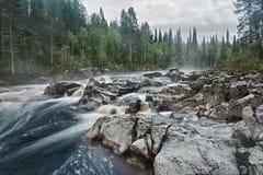 快速的森林河 免版税库存照片