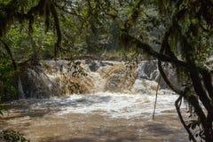 快速的河在Kakamega森林肯尼亚里 免版税库存照片