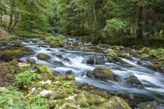 快速的河小河在一个丰富的森林里 图库摄影