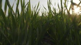快速的运动通过绿草 股票录像