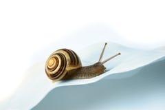 快速蜗牛跟踪 免版税图库摄影