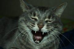 快活的猫 库存照片